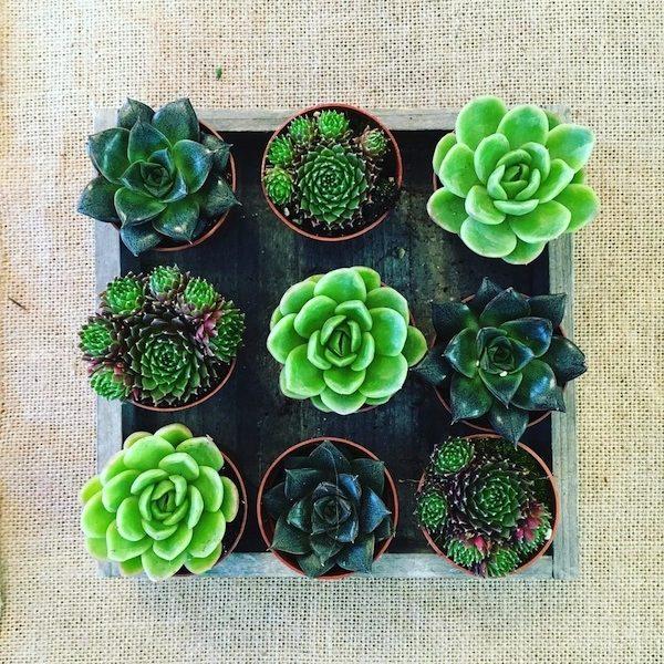 Centrepiece Succulents